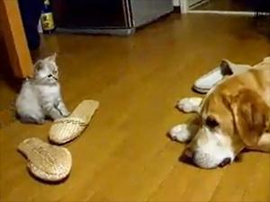 Cutest Cat Attack Ever