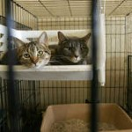 Seized Cats Available For Adoption