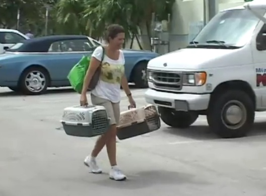 Miami Beach 3000 Gains More Ground in Combatting Cat Overpopulation