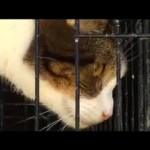 Update: Over 100 Seized Cats Euthanized