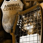 Judge Rules Hundreds of Cats Seized From Shelter