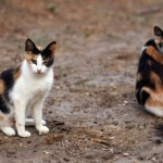 Local Group Awarded Grant to Spay/Neuter Feral Cats