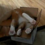 Hobbs and a Small Box