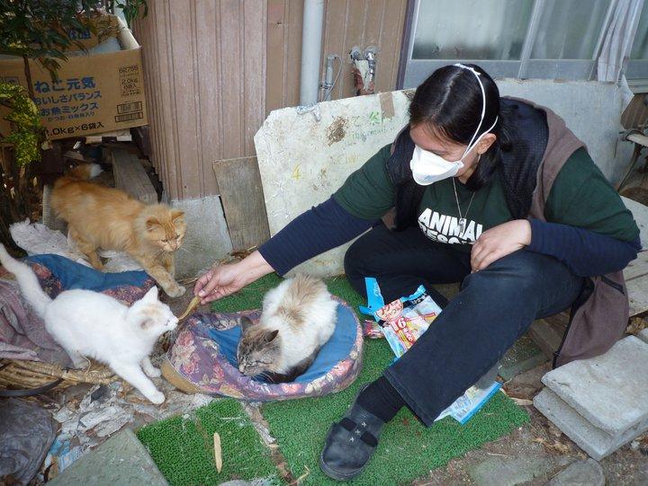 Fukushima Japan Animal Rescue Crisis: Experts to Meet in Tokyo May 2-3