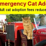 *Update* Residents Respond and Adopt Cats Affected by Shelter Fire