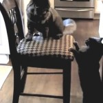 King of the Chair Smackdown!