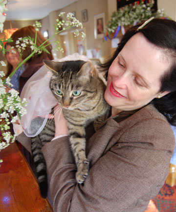 It's Wedding Day…For Two Cats!