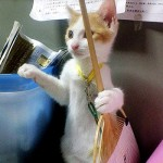 Spring Cleaning (cat-style)