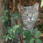 Free Feral Cat Spay Day