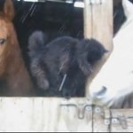 A Moment With The Barn Cat and Her Horses