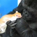 Koko and a New Kitten?