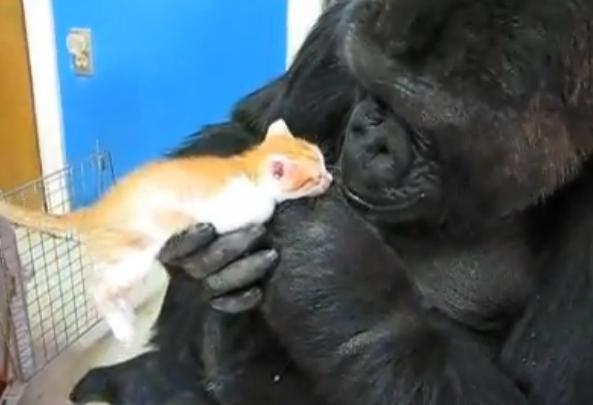 Koko and a New Kitten?   Life With Cats
