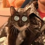 LASER CATS The Musical (as seen on SNL)