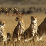 Film Saves Over 50k Acres of African Savanna