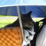 Remembering the Backpacking Kitten (and the answer to yesterday's brain teaser)