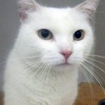 Dear User, Your Missing Cat Would Like To Be Friends With You On Facebook