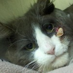 Bow The Cat Shot By Arrow Recovers: Doctor Offers Reward