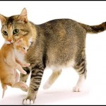 Happy Mothers Day From The Cats To You