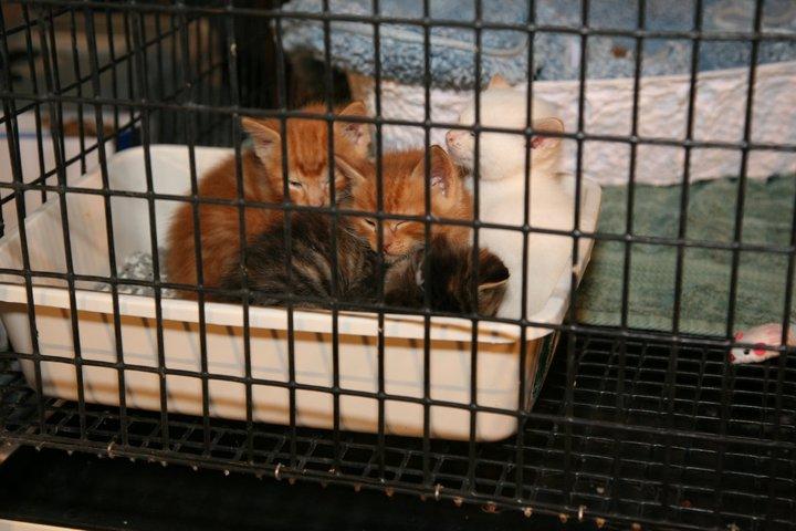 Joplin Humane Society MO Tornado Pet Rescue Update