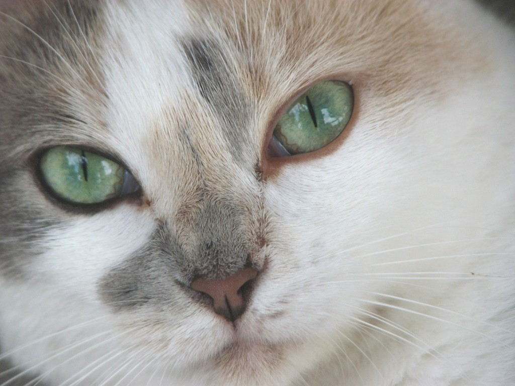 Interesting Facts About Cat Eyes Life With Cats
