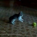 Kitten vs A Scary Thing: The Video Sensation