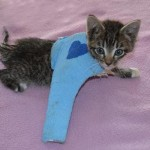 Kitten Saved By 9 Year Old Hero Dies; Attacker May Be Charged With Felony