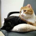 Hadley Gets a Home: Burned Kitty Heals, Finds a Friend, Gains a Family