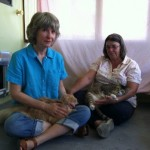 Concert Planned to Help with Seized Cats' Care Costs