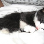 Justice For Dexter Kitten: Care2 Petition Asks Maximum Prosecution For Attacker