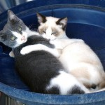 Feral Cat Rescuer Has Her Day in Tax Court