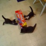 Attack of the Kittens!