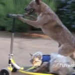 Dog Gives Scooter Kitty a Ride