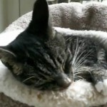 Cute Kitty Fipi in His Little Bed