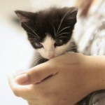 Dexter Kitten: Updates and Video of Tiffany and Dexter at her Home