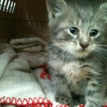 Albany NY Man Oversees 5 Hour Rescue of Kitten Trapped In Drainpipe