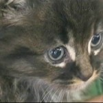 Kitten Hitches Ride to Vermont in Car's Air Filter: Finds New Home