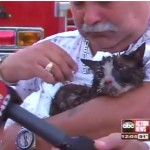 Cat Found by Firefighters After Woman Punches Cop Who Kept Her Out of Burning Home