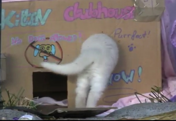 Kitten Clubhouse / Shake Your Booty Double Feature
