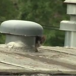 Lucky Rescue: Mouse Strands Minot ND Cats When River Rises