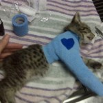 13 Year Old Little Heart Kitten Killer Sentenced