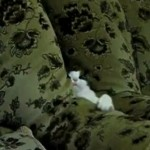Attack of the Ninja Kitty of the Comfy Chairs