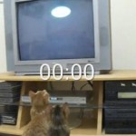 Pong For Cats