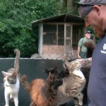 Haven Acres Cat Seizure Jumps to 671, Now Nation's Largest Ever