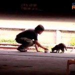Cats Left Behind at Singapore Train Station