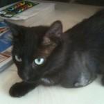 Reward Rises in Case of Davie, Cat Shot in Own Yard Who Lost Leg