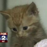 Women Save Kitten Tied in Bag and Tossed Down Riverbank