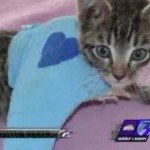 Little Heart Kitten's 12yr Old Killer Found Guilty But Justice Is Weakly Served