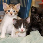 3 Kittens Safe After New Rochelle NY Shed Fire
