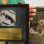 $7.6 Million Veterinary Medical School Cancer Research Gift Made in Cat's Name