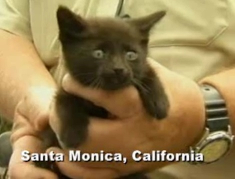 Lucky California Kitten Removed From Car After Ride To the Mall